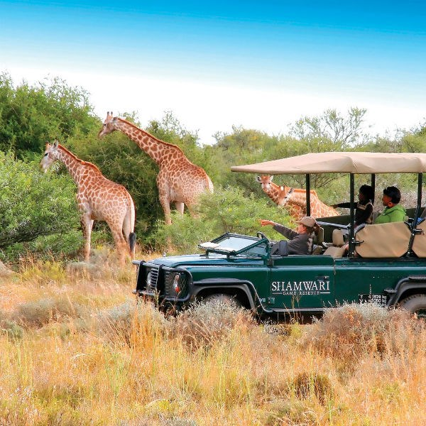 Wildlife and Safari Holidays | Emirates Holidays